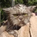 Not a happy kitty!