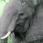 Stunning elephant